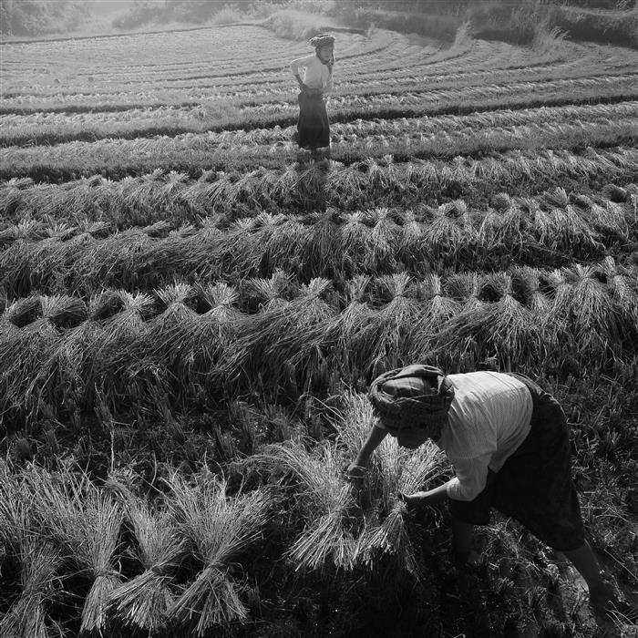 Discover Original Art by Etienne Roudaut | Myanmar Rice Field photography | Art for Sale Online at UGallery