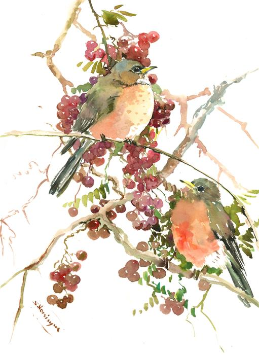 Discover Original Art by Suren Nersisyan | American Robins and Berries watercolor painting | Art for Sale Online at UGallery