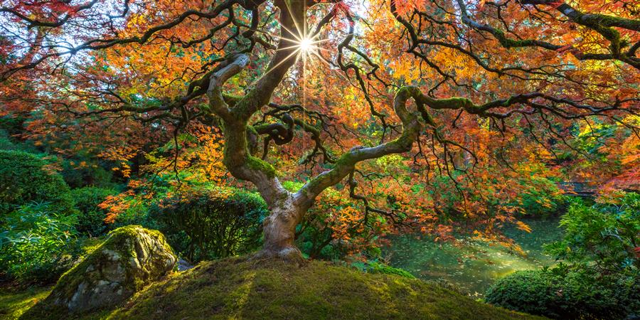 Original art for sale at UGallery.com | Tree of Life by ROSS LIPSON | $295 |  | ' h x ' w | \art\photography-Tree-of-Life