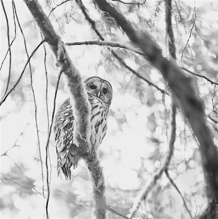 Original art for sale at UGallery.com | The Watcher by MARK MCKNIGHT | $135 |  | ' h x ' w | \art\photography-The-Watcher