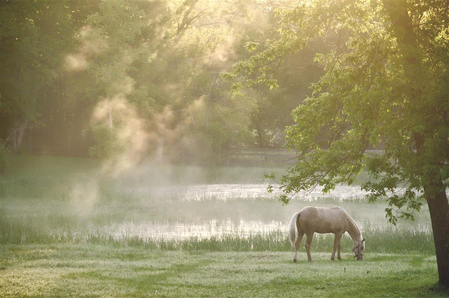 Original art for sale at UGallery.com | Morning Mist by EMILY  KENT | $195 |  | ' h x ' w | \art\photography-Morning-Mist