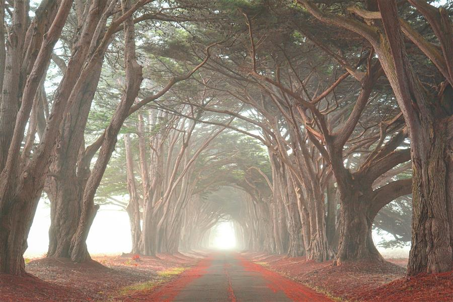 Original art for sale at UGallery.com | Cypress Tree Tunnel by EMILY  KENT | $195 |  | ' h x ' w | \art\photography-Cypress-Tree-Tunnel