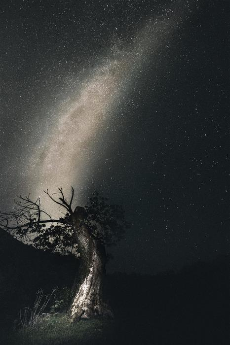 Original art for sale at UGallery.com | Shapes in Nature: Milky Tree by FABIO SOZZA | $470 |  | ' h x ' w | \art\photography-Shapes-in-Nature-Milky-Tree