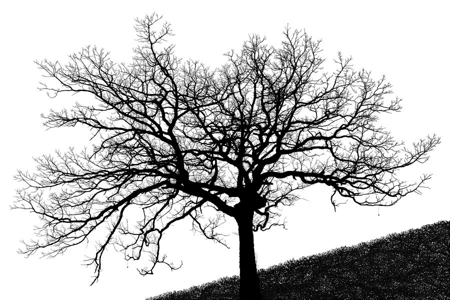 Original art for sale at UGallery.com | Prayer Tree by DANIEL DETERS | $220 |  | ' h x ' w | \art\photography-Prayer-Tree