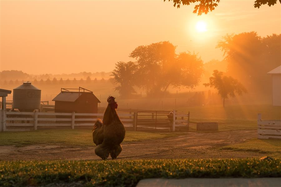 Original art for sale at UGallery.com | Morning Call by LORIANNE ENDE | $145 |  | ' h x ' w | \art\photography-Morning-Call