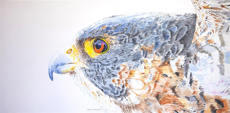 Discover Original Art by Emil Morhardt | Kisa the Peregrine Winging It acrylic painting | Art for Sale Online at UGallery