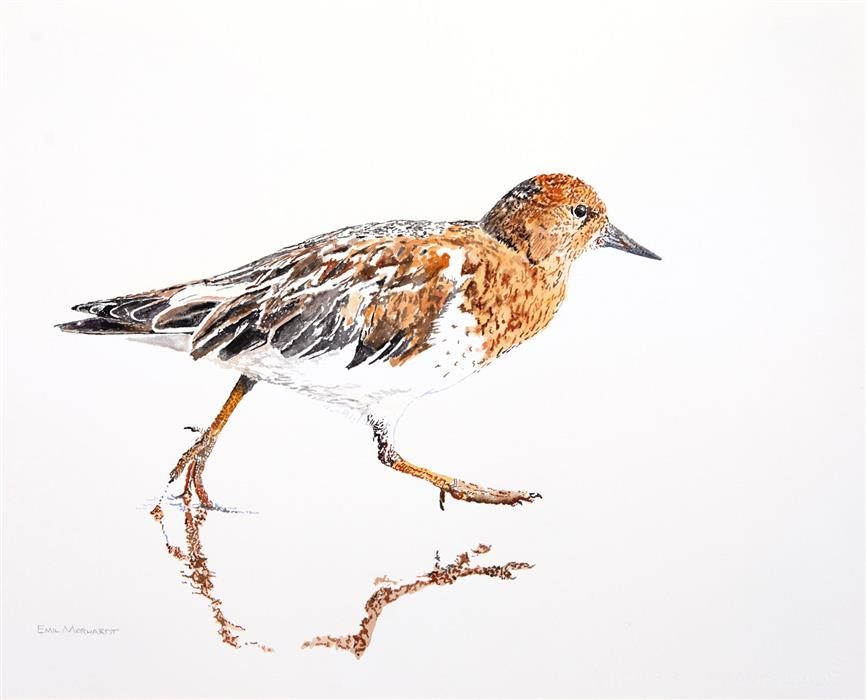 Discover Original Art by Emil Morhardt | Black Turnstone #3 watercolor painting | Art for Sale Online at UGallery