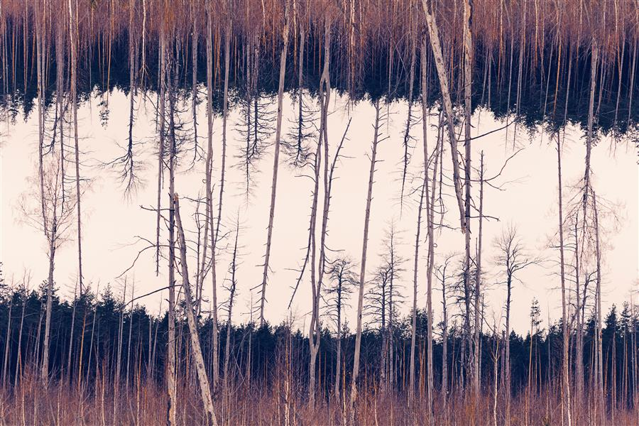 Original art for sale at UGallery.com | Lines of woods. by ILYA KHUROSHVILI | $145 |  | ' h x ' w | \art\photography-Lines-of-woods