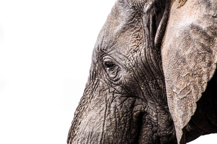 Original art for sale at UGallery.com | An Elephant in Its Element by MARK FRIEDMAN | $270 |  | ' h x ' w | \art\photography-An-Elephant-in-Its-Element
