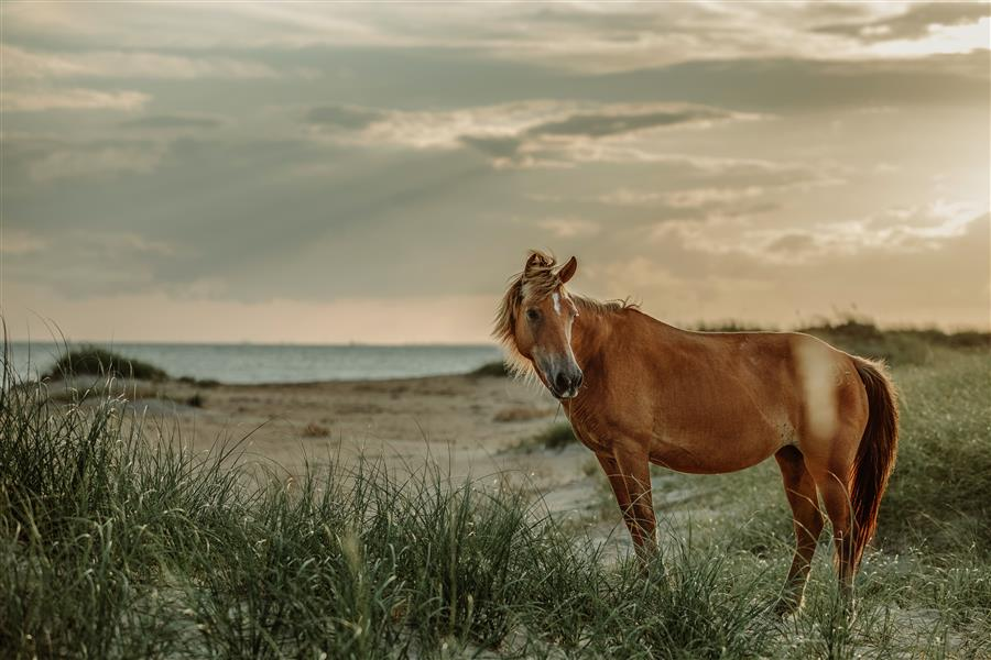 Original art for sale at UGallery.com | Shackleford Horse by CAREY ESTRADA | $175 |  | ' h x ' w | \art\photography-Shackleford-Horse