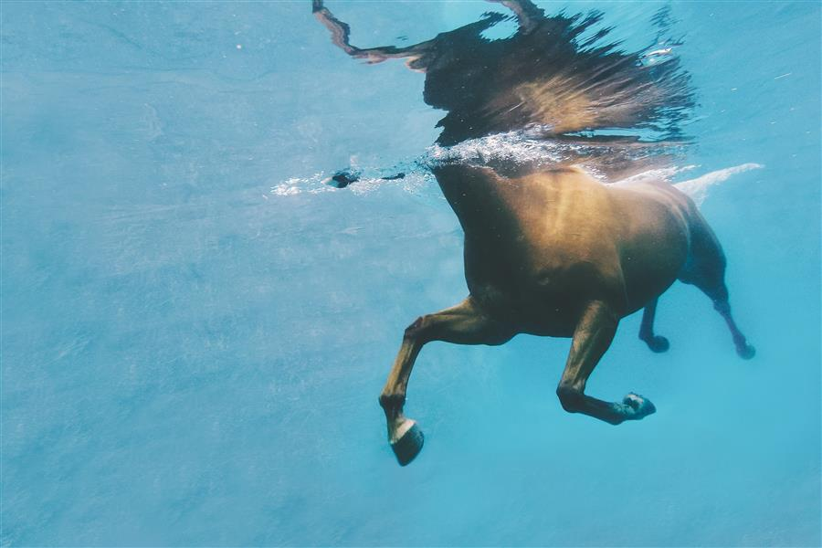 Original art for sale at UGallery.com | Sea Horse by CAREY ESTRADA | $175 |  | ' h x ' w | \art\photography-Sea-Horse